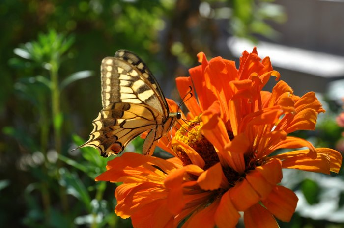 Polno metuljev